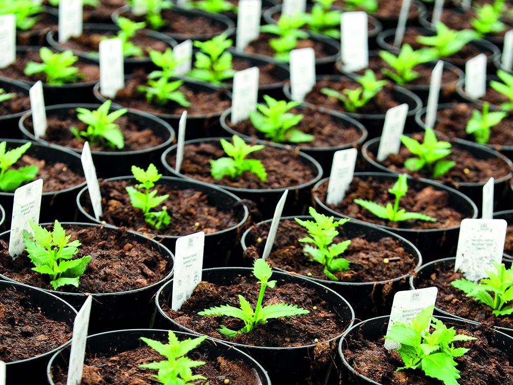 Etikettendrucker zur Kennzeichnung von Pflanzen
